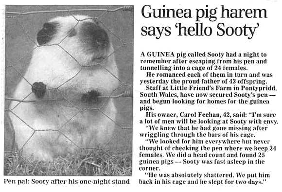 Sooty the guinea pic The Turner Family Fun Stuff